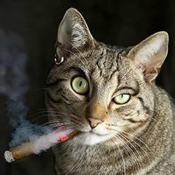 Cigar Cat