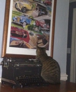 Cat Stares at Picture